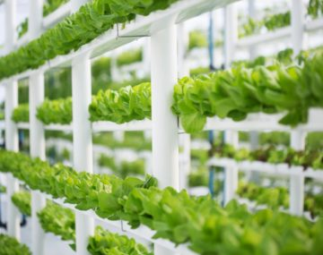 Hydroponics – learn from an expert