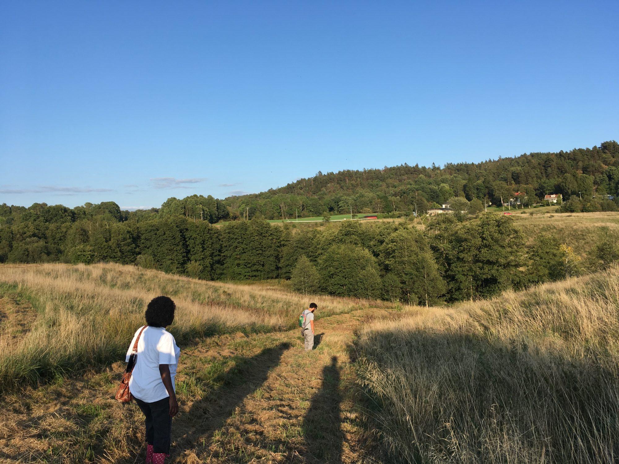 Big farmland (for market gardening & agroforestry)
