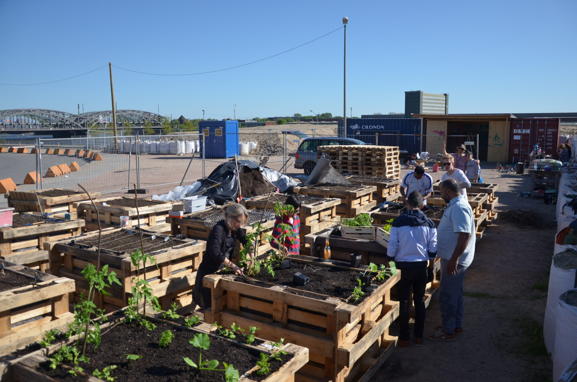 Urban Farming Project In Refugee Area In Hafencity