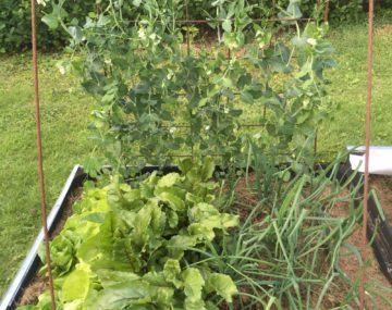 Intresseanmälan – nytt projekt för odling i Partille