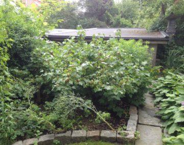 Den Ätbara Villaträdgården