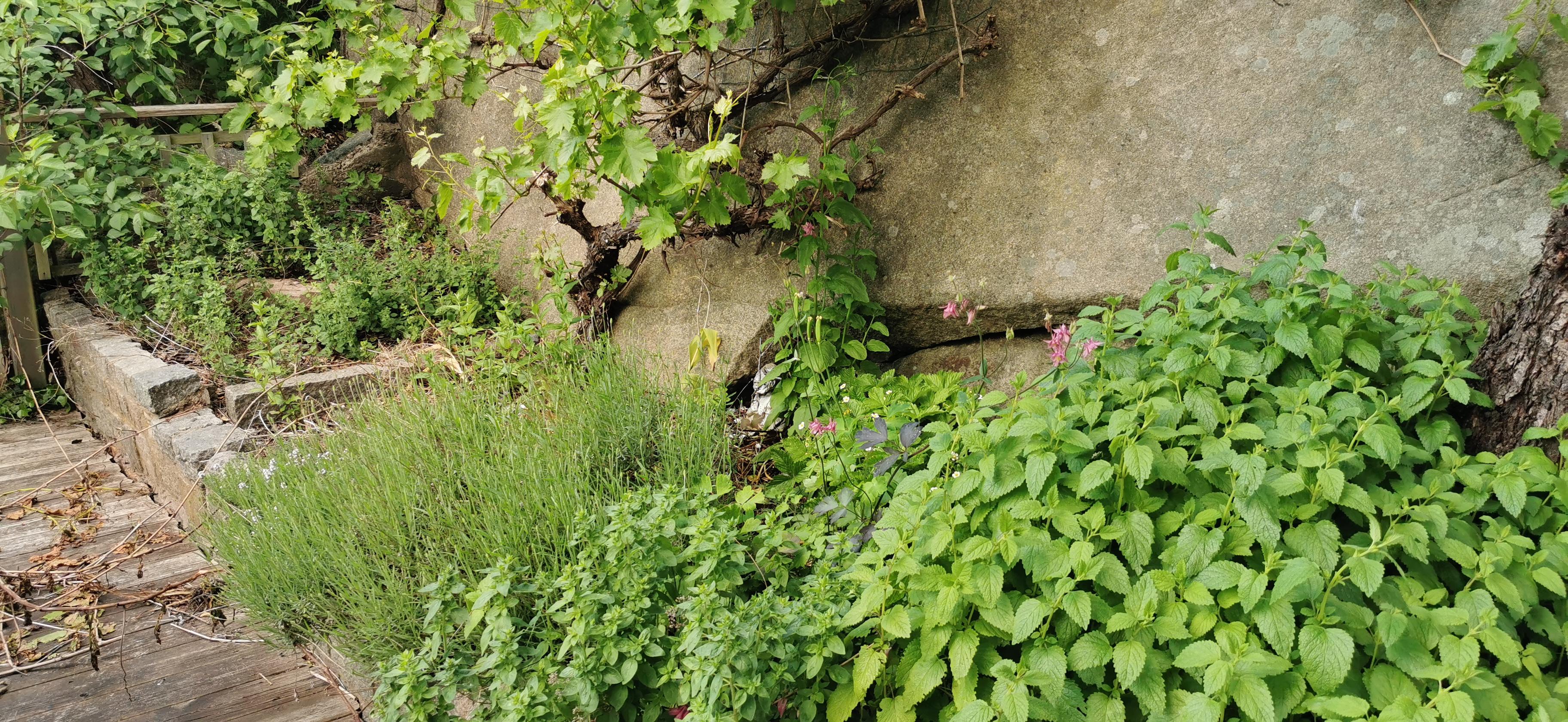 Prunkande & Vildvuxen trädgård söker odlare