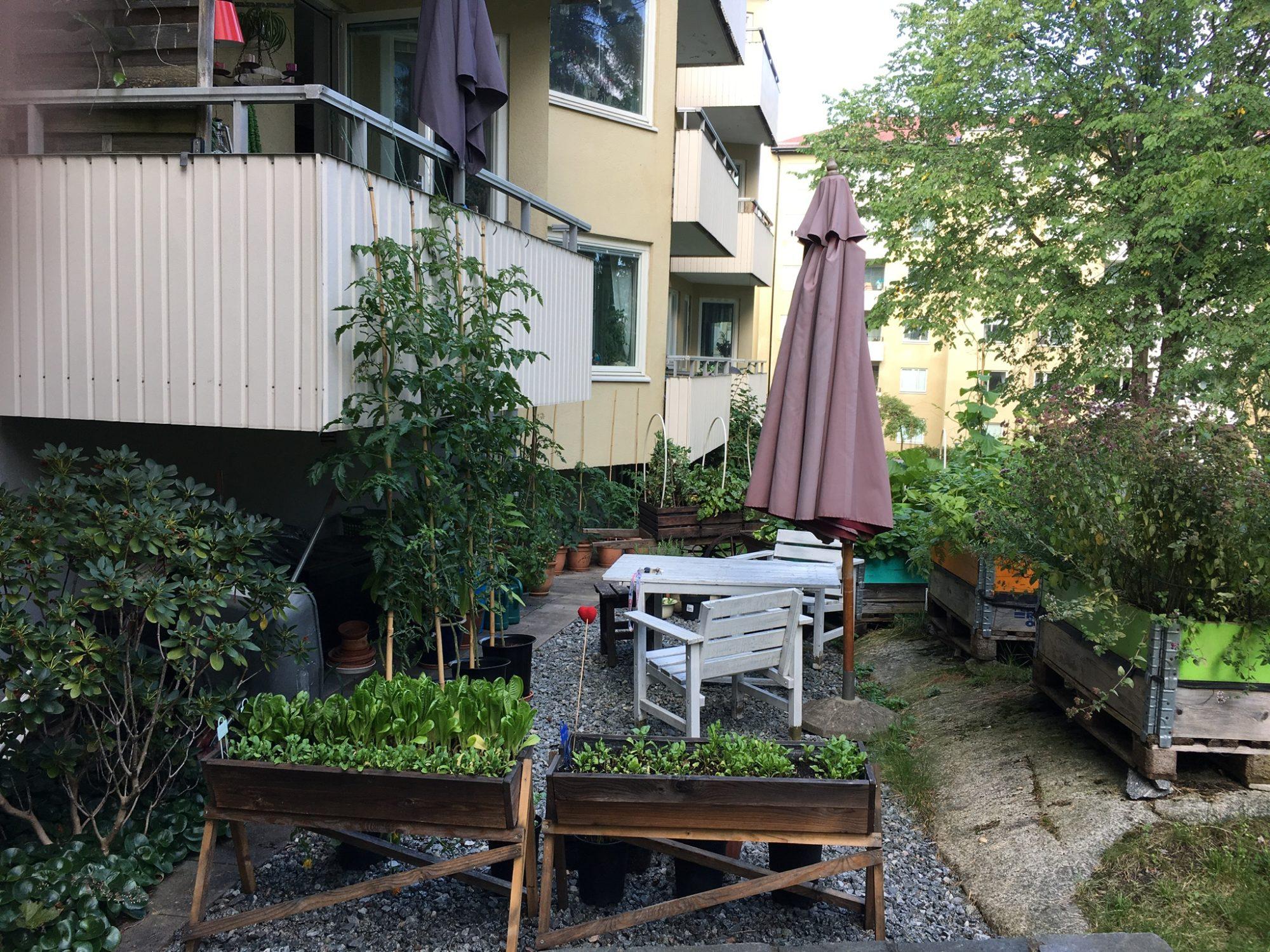 Åsali's odling