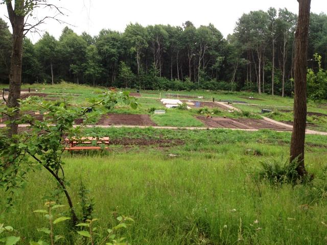 Skogsgläntans odlarförening